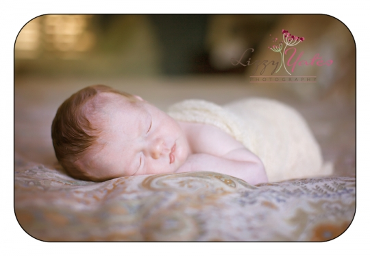 little rock lifestyle newborn pictures